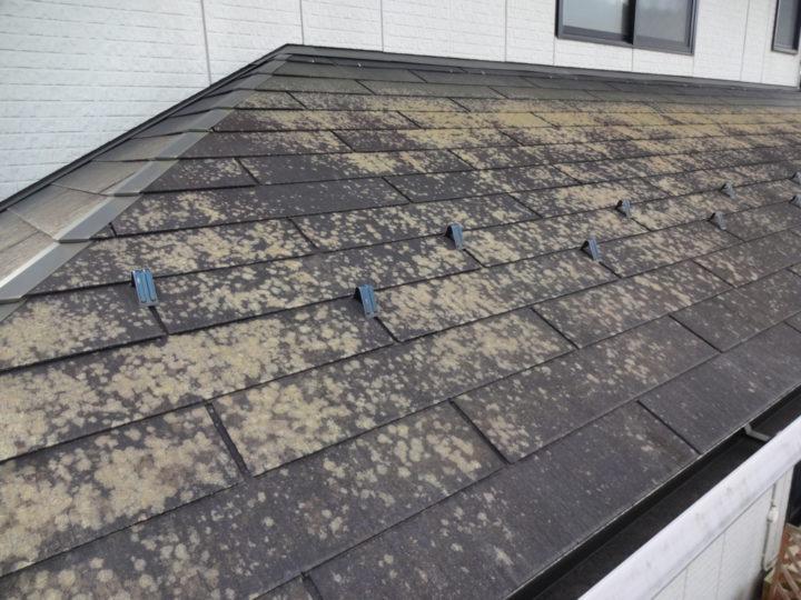 屋根には藻やコケが見えて汚れています。