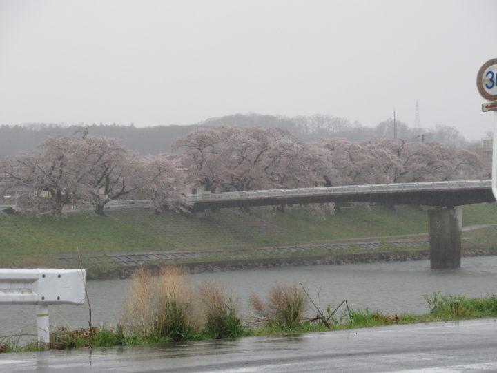 桜に時期です!(^^)!